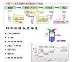 东方泰勒虫PCR进口试剂盒